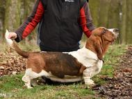 Matka / mother: NewDown Bassets Theresia DiSio